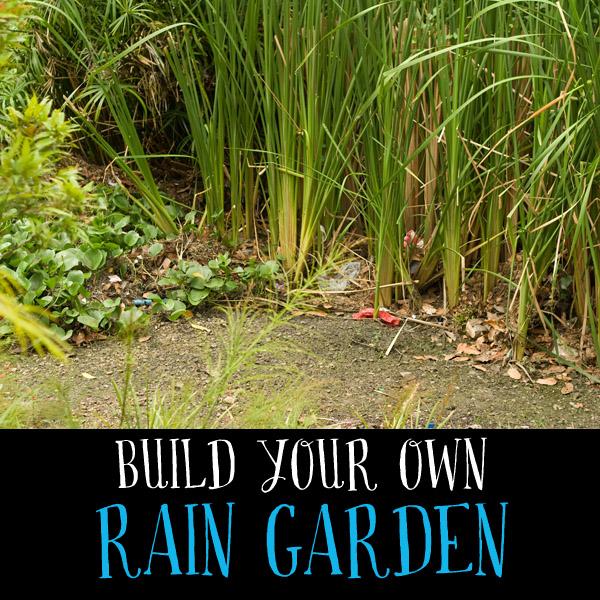 build rain garden