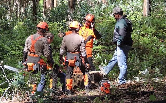 an urgent plea retired oregon logger wants legislature to protect