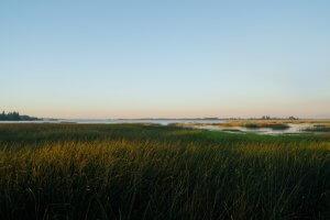 Image of marsh landscape