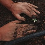 hands planting a small seedling in soil